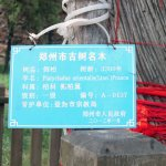 Даосский храм Чжунъюэ - возраст дерева 3300 лет!